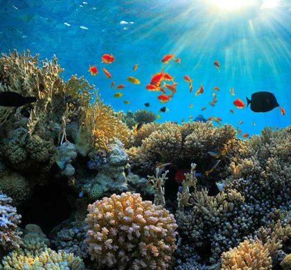 La crema solar deja de ser una amenaza para el fondo marino