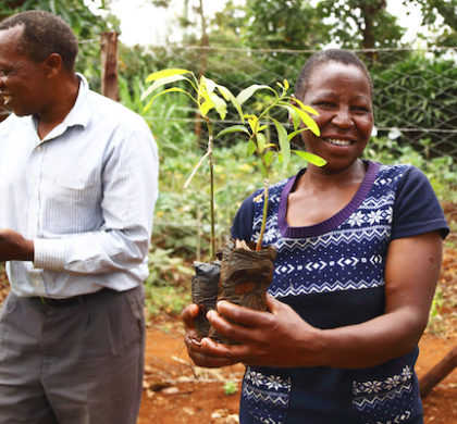 Treedom propone combatir la huella de la navidad en el planeta regalando árboles