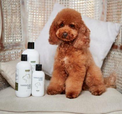 Nace Kamouflage, cosmética para perros felices con aromas 100% naturales