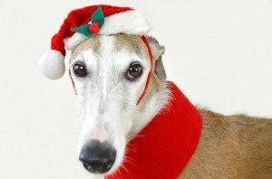 Pet&Net_Navidad