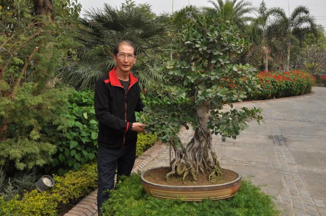 El mundo del bonsái abre sus puertas en el delta del Ebro