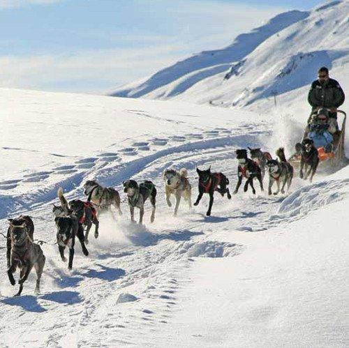Pasear por la nieve en trineos tirados por perros será el regalo estrella de esta Navidad